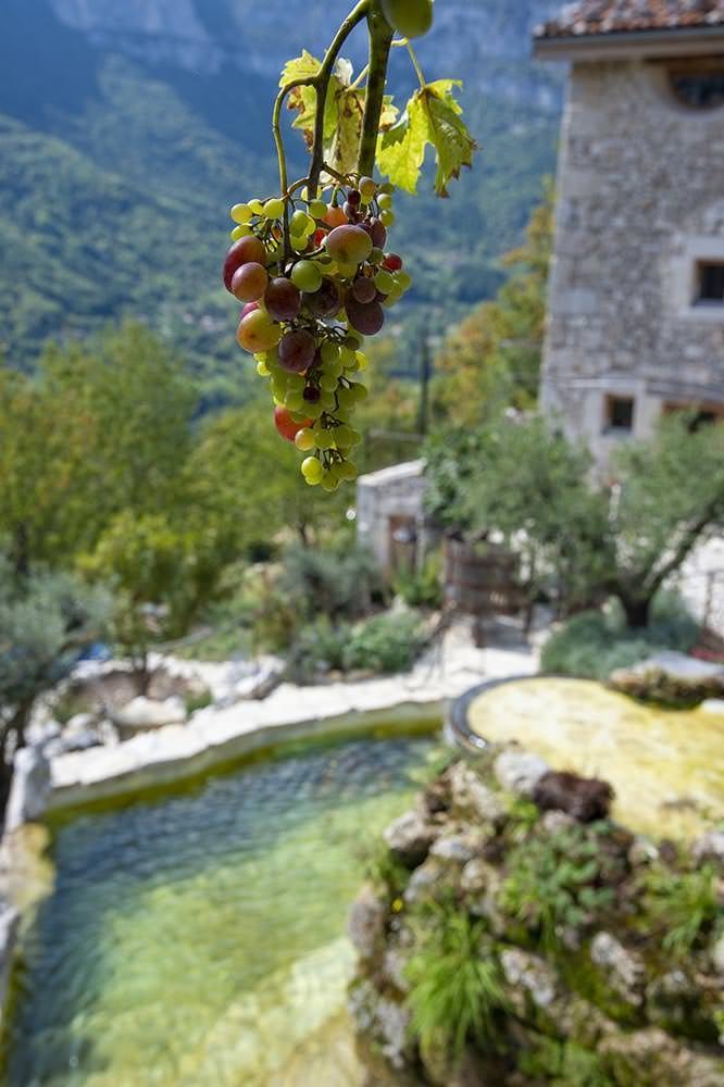 vue bassin naturel et vigne dans le vercors